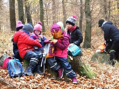 Naturerleben im Herbstwald: Kita-Kinder auf der Wanderung