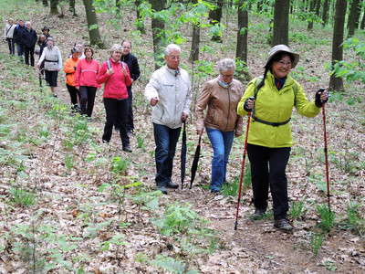 Durch das Waldgebiet Haard im Osten des Naturparks Hohe Mark führte eine zehn Kilometer lange Rundwanderung des Vereins Hohe Mark Tourismus e.V.