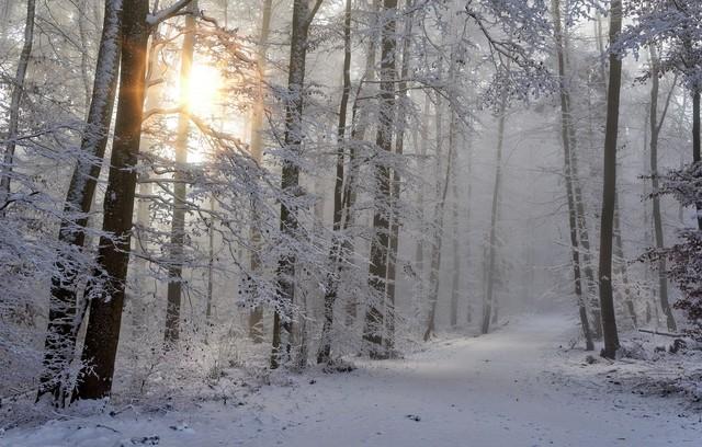 Startseite_Winterwald