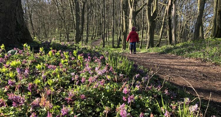 Durch den Wald, vorbei an Frühlingsblumen